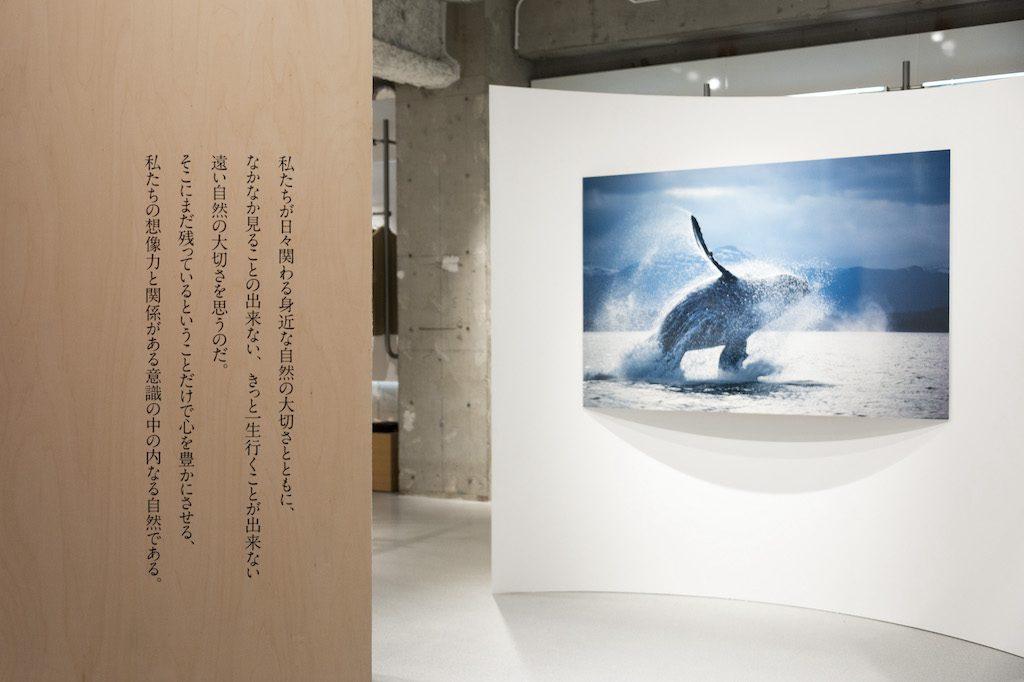 THE NORTH FACE,ザ・ノース・フェイス,星野道夫,インスタレーション,想像の旅路,写真展,